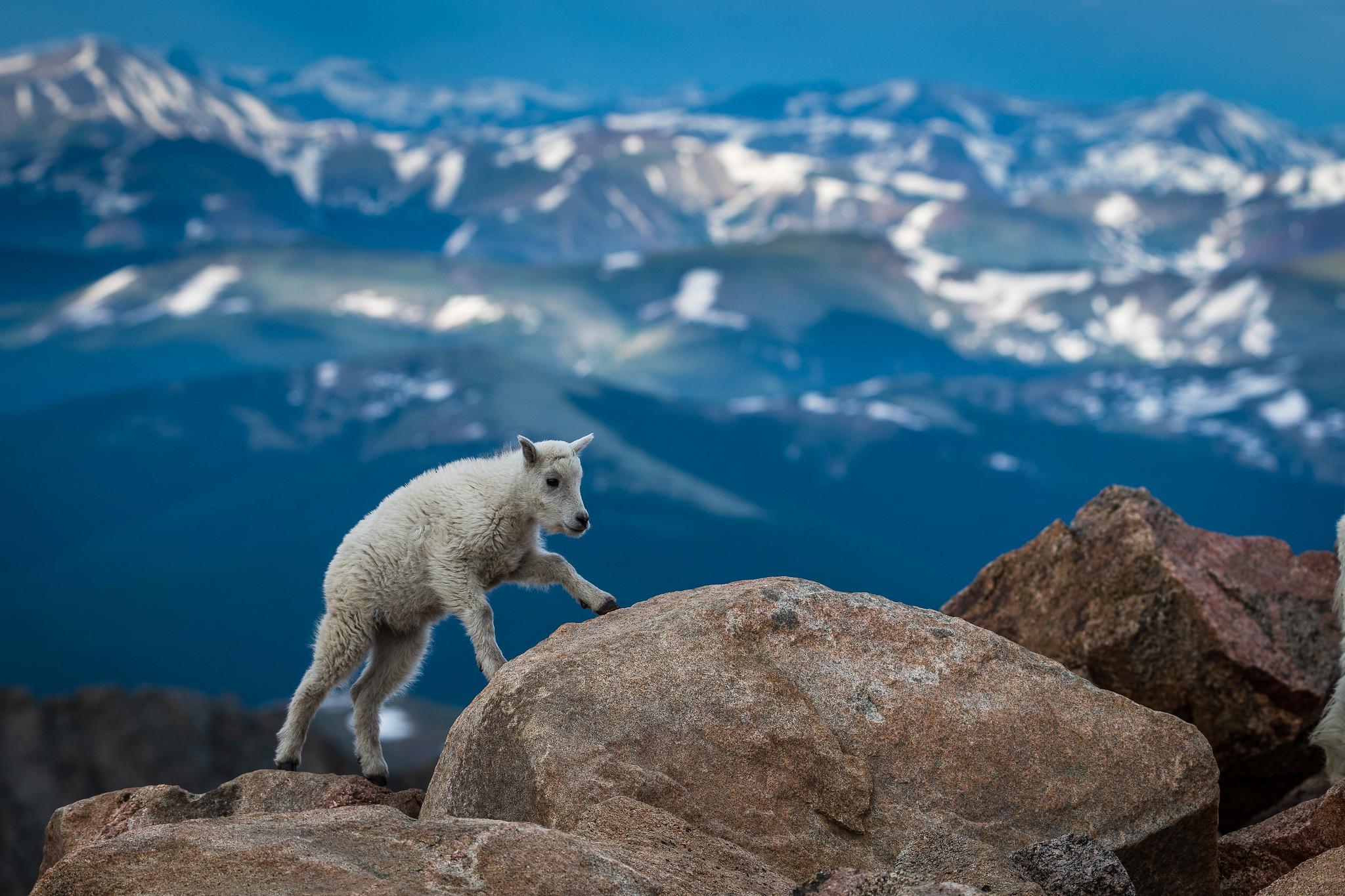 Альпы: лучшие природные парки для отдыха в горах